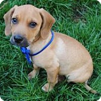 Adopt A Pet :: Vinny - Marlton, NJ
