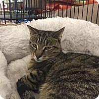 Adopt A Pet :: Joey - Bear, DE