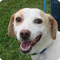 Adopt A Pet :: Bambam - Erwin, TN