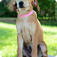 Adopt A Pet :: Neema - Waldorf, MD