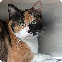 Adopt A Pet :: Chloe - Elyria, OH