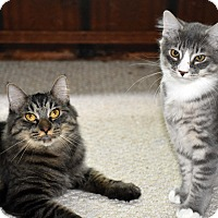 Adopt A Pet :: Amalie & Starby-ADOPTED! - Bristol, CT