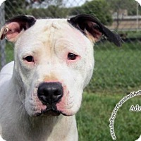 Adopt A Pet :: Lucy - Sidney, OH