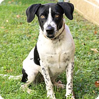 Adopt A Pet :: Thelma - Mayflower, AR
