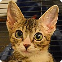 Adopt A Pet :: Finley - Sherman Oaks, CA