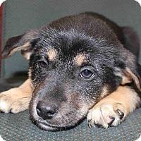 Adopt A Pet :: Payson - Portland, ME