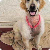 Adopt A Pet :: Delilah - Tempe, AZ