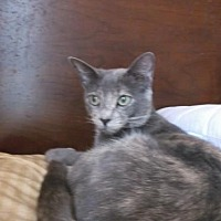Adopt A Pet :: Jewel - el mirage, AZ