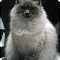 Adopt A Pet :: Sasha - Keizer, OR