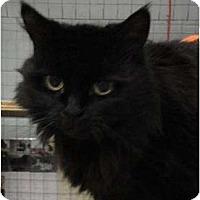 Adopt A Pet :: Sasha - Mission, BC