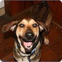 Adopt A Pet :: Murphy - Covington, KY