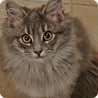Adopt A Pet :: Sylvia - East Hanover, NJ