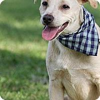 Adopt A Pet :: Truman - Flowery Branch, GA