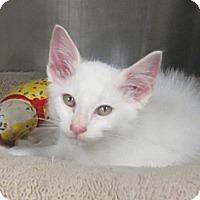 Adopt A Pet :: Sam - Brockton, MA