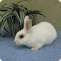Adopt A Pet :: C.S. Lewis - Bonita, CA