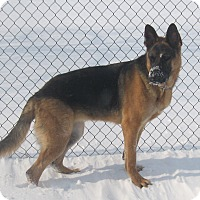 Adopt A Pet :: Skye - Rigaud, QC