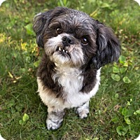 Adopt A Pet :: Dexter - Drumbo, ON