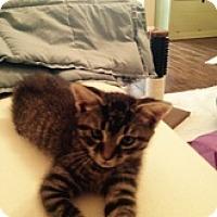 Adopt A Pet :: Peter 'DP' - Watkinsville, GA