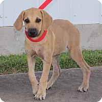 Adopt A Pet :: Glory - West Hartford, CT