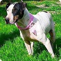 Adopt A Pet :: Muriel - N - Huntington, NY