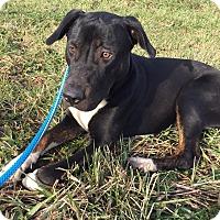 Adopt A Pet :: Daphne - Toledo, OH