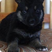Adopt A Pet :: DELTA - Winnipeg, MB