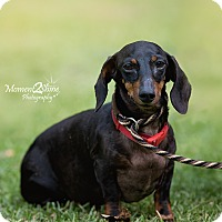 Adopt A Pet :: George - Daleville, AL