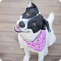 Adopt A Pet :: Betty Boop - Kingwood, TX