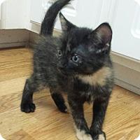Adopt A Pet :: Sundancer - Crocker, MO