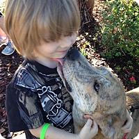 Adopt A Pet :: Buck - Albemarle, NC