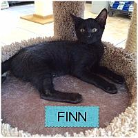Adopt A Pet :: FINN - Hamilton, NJ
