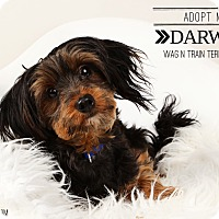 Adopt A Pet :: Darwin-Pending Adoption - Omaha, NE