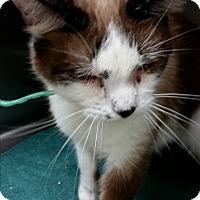 Adopt A Pet :: Bazell - Chippewa Falls, WI