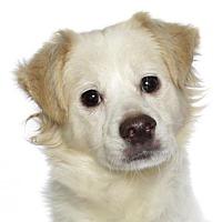 Adopt A Pet :: Brando - Oakland Park, FL