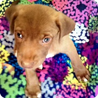 Adopt A Pet :: Chance-ADOPTION PENDING - Portsmouth, NH