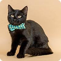 Adopt A Pet :: Bert - Wyandotte, MI
