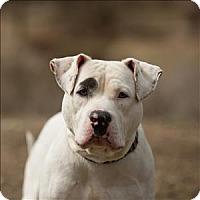 Adopt A Pet :: Kali - Escondido, CA