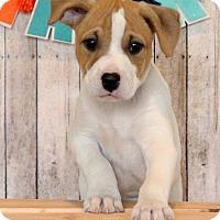 Adopt A Pet :: Farris - Waldorf, MD