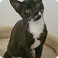 Adopt A Pet :: Seymore - Los Angeles, CA