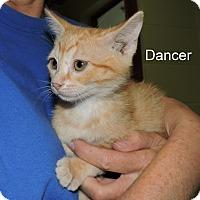 Adopt A Pet :: Dancer - Slidell, LA
