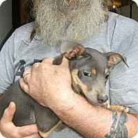 Adopt A Pet :: Ceaser - Evensville, TN
