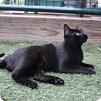 Adopt A Pet :: Williamette - Colorado Springs, CO
