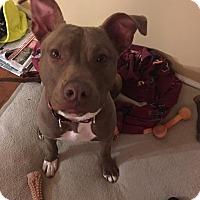 Adopt A Pet :: Sage - Kill Devil Hills, NC