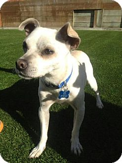 Terrier (Unknown Type, Small) Mix Dog for adoption in San Francisco, California - Oso