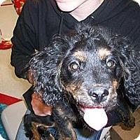 Adopt A Pet :: Ollie - Salem, OR