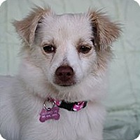 Adopt A Pet :: Lily - san diego, CA