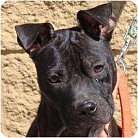Adopt A Pet :: Olive - Gilbert, AZ