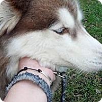 Adopt A Pet :: Jasper - Wappingers Falls, NY