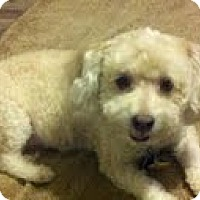Adopt A Pet :: Peach Cobbler (Peaches) - Shawnee Mission, KS