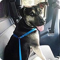 Adopt A Pet :: Delilah - Pleasant Grove, CA